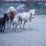 «Мы ставим цель возродить в Казахстане конную культуру и бережное отношение к лошади»