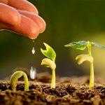 Кредитная поддержка сельского хозяйства хромает