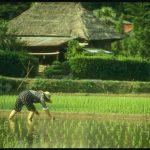 В странах ЕАЭС установлены тарифные квоты на длиннозерный рис из Вьетнама