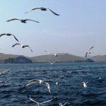 Миллионы тонн нефти нашли под Байкалом