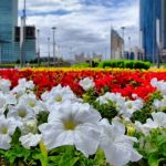 Почти 9 млн цветов посадят в Нур-Султане